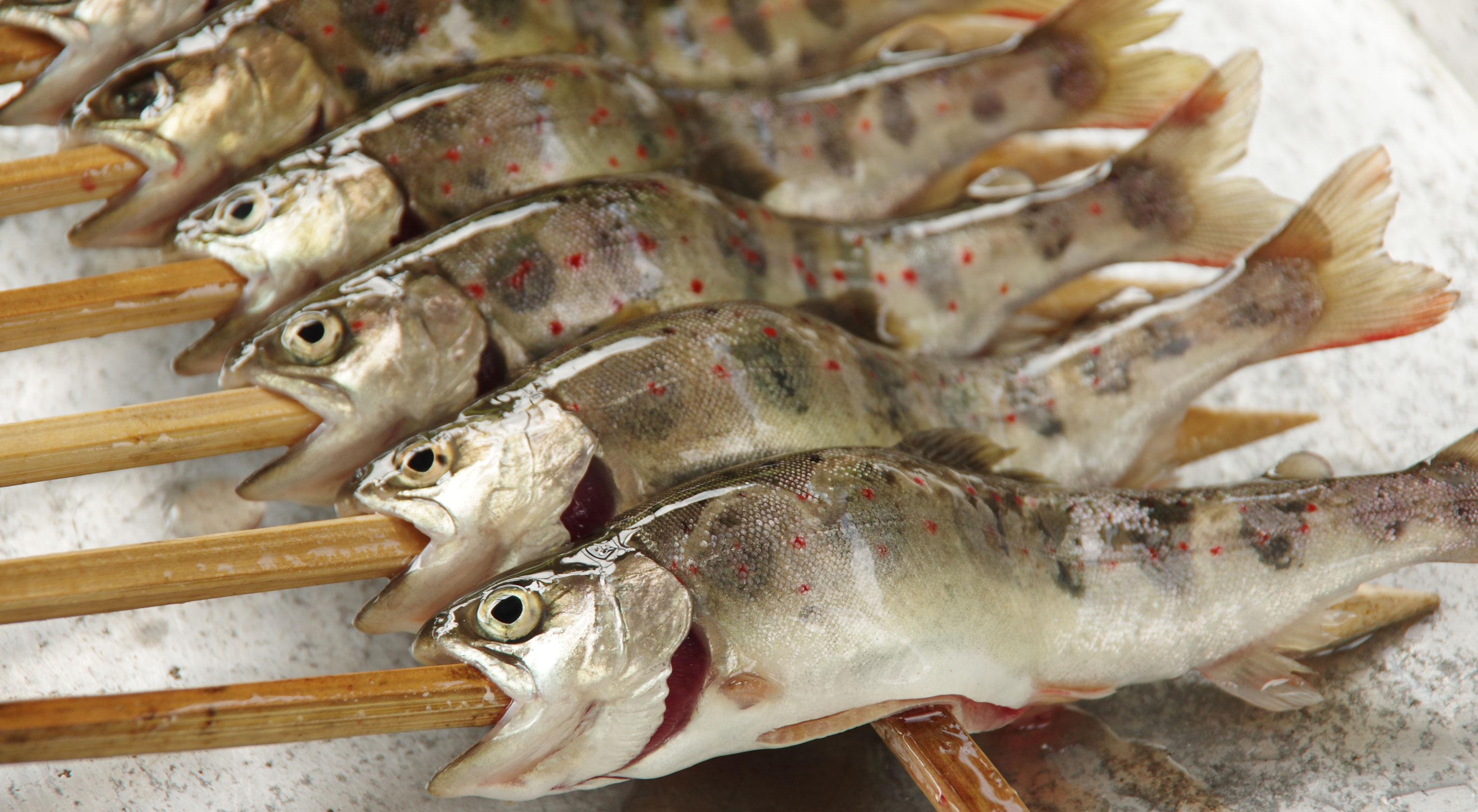 【日名倉養魚場*釣って、つかんで、食べて!!】 ~公式ホームページ~